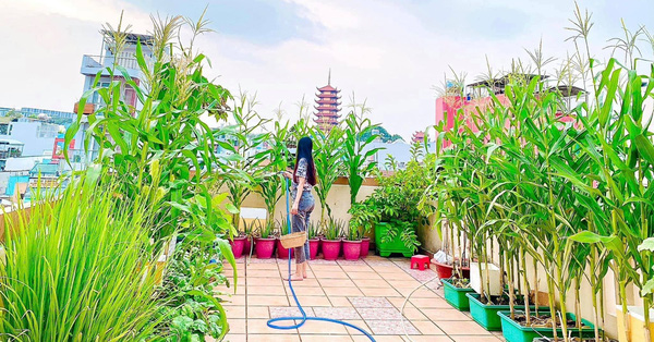 Khu vườn trên sân thượng vạn người mê ở Sài Gòn, đủ đầy chẳng thiếu thứ gì của nữ CEO xinh đẹp