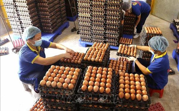 Giá trứng gia cầm ở Hà Nội tăng mạnh