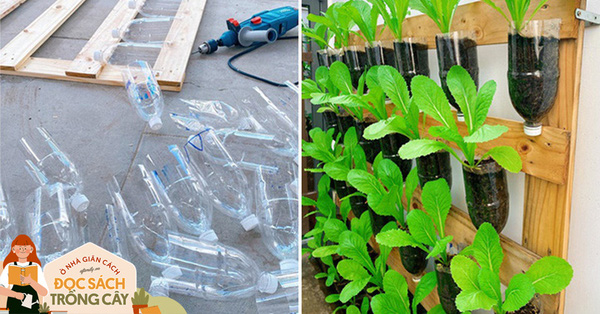 Học cô gái Tiền Giang tận dụng chai nhựa trồng rau sạch trong mùa dịch