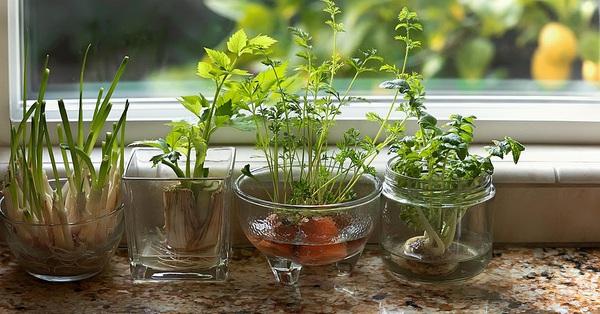 Hướng dẫn cách trồng cực dễ 4 loại rau gia vị bạn không thể thiếu trong bữa ăn hàng ngày