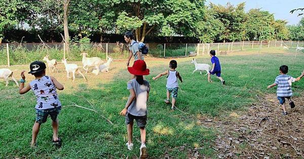 Cách Hà Nội 50km, có 1 nông trại thú vị nơi trẻ có thể cưỡi ngựa, cho dê ăn và nhiều trải nghiệm hấp dẫn khác