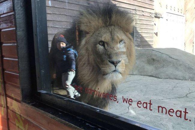Bức ảnh bé trai đứng cạnh con sư tử hung tợn khiến ai nhìn vào cũng thót tim cho đến khi nghe câu chuyện xúc động của người mẹ - Ảnh 1.