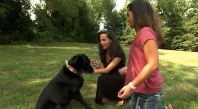 Chó cưng bụng phình to như có khối u, chủ vội vàng xin bác sĩ phẫu thuật gấp để rồi ngỡ ngàng với cảnh tượng trong bụng con vật - Ảnh 1.
