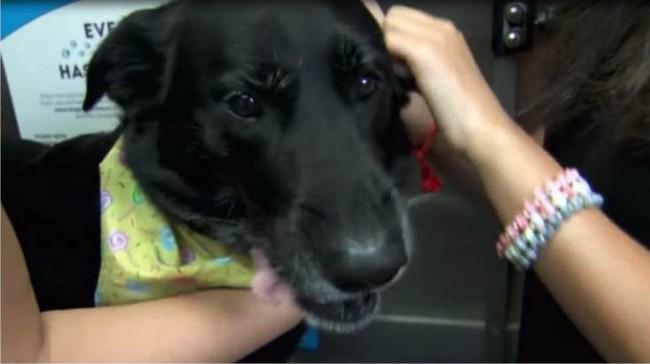 Chó cưng bụng phình to như có khối u, chủ vội vàng xin bác sĩ phẫu thuật gấp để rồi ngỡ ngàng với cảnh tượng trong bụng con vật - Ảnh 3.