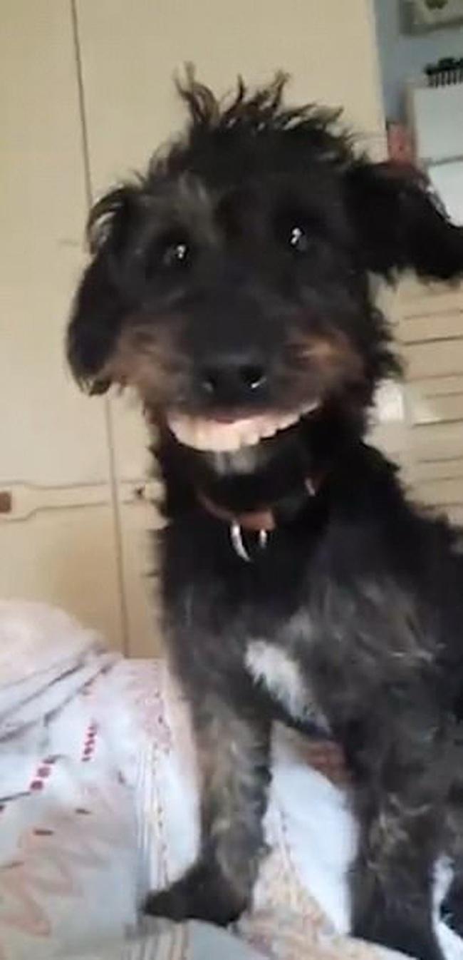 """Dẫn chó cưng đến nhà bà chơi chưa được bao lâu, con vật đã """"biến hình"""" khiến dân mạng vừa hoảng sợ vừa không nhịn được cười - Ảnh 5."""