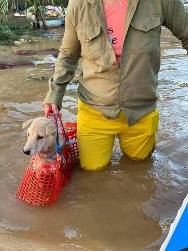 Chú chó được bà chủ xách theo không rời nửa bước giữa mênh mông nước lũ khiến dân mạng có một phen cười bò - Ảnh 2.