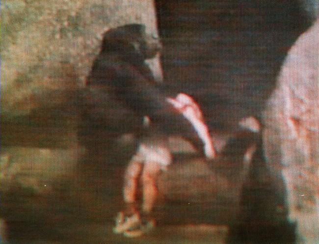 Bé trai 3 tuổi rơi vào chuồng khỉ đột và hành động của con vật khiến thế giới ngỡ ngàng, 20 năm sau chuyện tương tự xảy ra song kết cục ngược lại hoàn toàn - Ảnh 2.