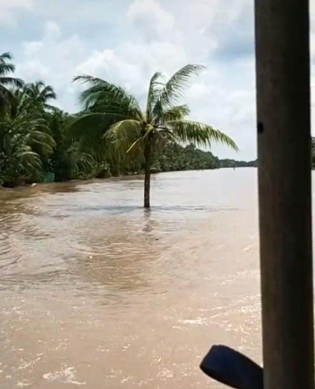 Cây dừa kỳ lạ mọc giữa lòng sông ở Bến Tre: Chuyện tưởng đùa nhưng hóa ra lại có thật! - Ảnh 3.