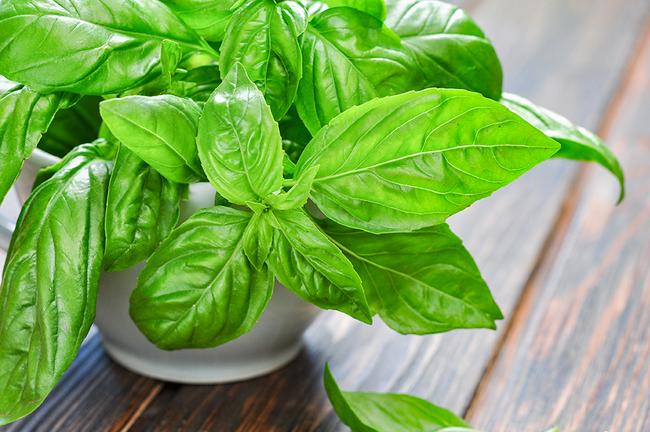 12 loại rau bạn nên trồng trong tháng 11 - Ảnh 8.
