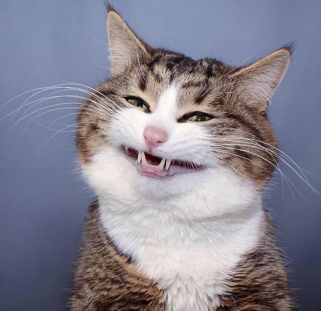 Không phải cho ăn bừa bãi hay cưng nựng suốt ngày, đây mới là cách hiệu quả nhất để làm thân với mèo! - Ảnh 2.