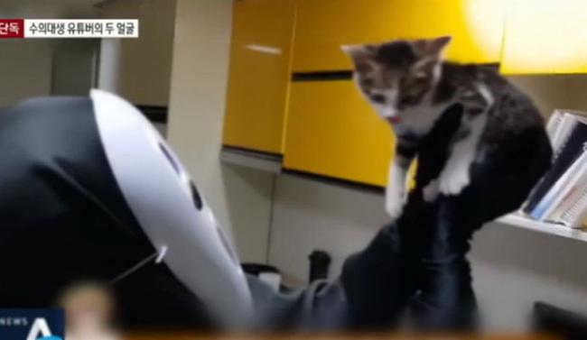 Phẫn nộ với những hành vi ngược đãi động vật vì câu view: Bỏ đói mèo con để trông đáng yêu hơn, ép chó ăn ớt đến mức rơi nước mắt - Ảnh 1.