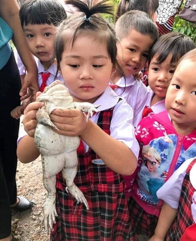 Để học sinh hiểu về ếch, cô giáo cho các em sờ tận tay nhưng bức ảnh cuối tiết lộ kết đắng của loài lưỡng cư khiến ai cũng bật cười - Ảnh 6.