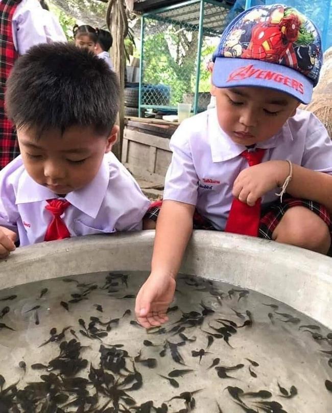 Để học sinh hiểu về ếch, cô giáo cho các em sờ tận tay nhưng bức ảnh cuối tiết lộ kết đắng của loài lưỡng cư khiến ai cũng bật cười - Ảnh 1.