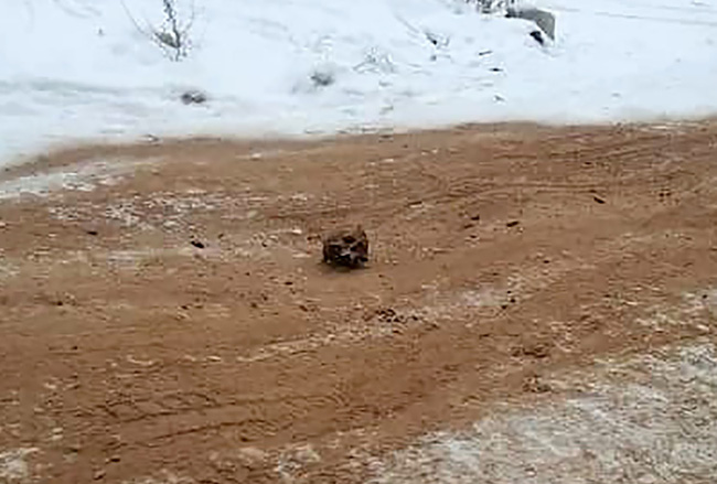 Kinh hoàng hộp sọ và xương người được tìm thấy rải rác trên con đường ở Nga, dân địa phương đồn đoán nguyên do bất ngờ - Ảnh 1.