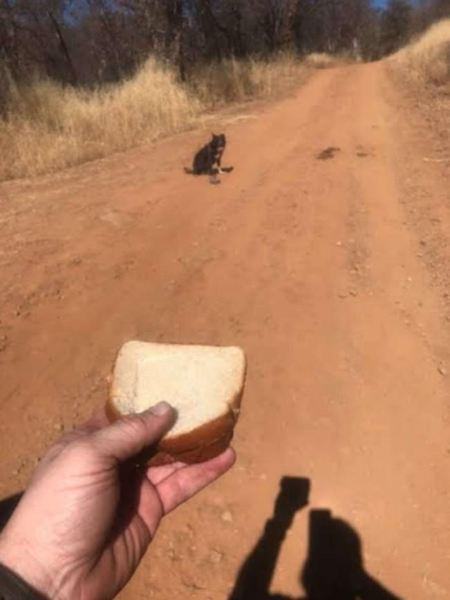 Lái xe trên đường gặp chú chó lạc chủ, tài xế đến giúp thì con vật từ chối, định rời đi trước khi hốt hoảng thấy cảnh tượng gần đó - Ảnh 3.
