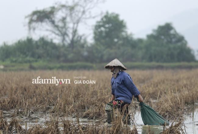 Độc quyền: Khung cảnh tại quê hương Đỗ Thị Hà trong những ngày chờ đón Tân Hoa hậu về làng - Ảnh 3.