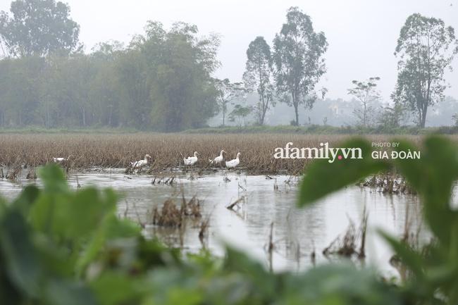 Độc quyền: Khung cảnh tại quê hương Đỗ Thị Hà trong những ngày chờ đón Tân Hoa hậu về làng - Ảnh 5.