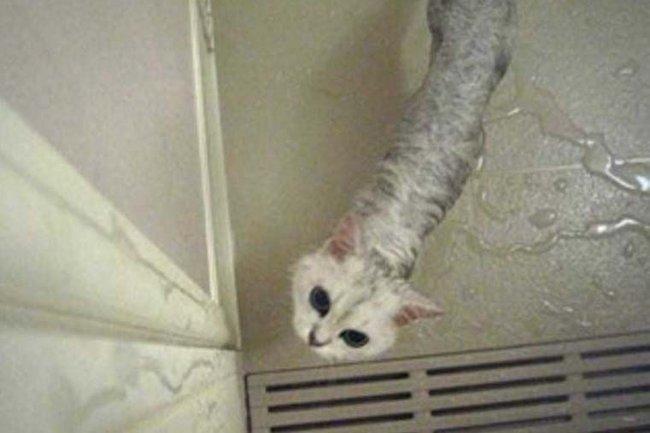 """Ép mèo cưng đi tắm, cô gái suýt """"trầm cảm"""" vì màn """"hiện nguyên hình"""" không thể dối trá hơn của nó - Ảnh 3."""