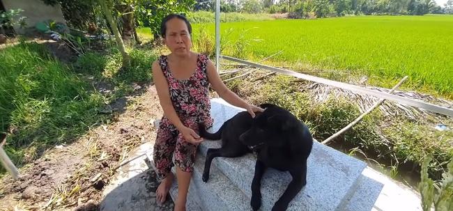 Cảm thương chú chó trung thành nằm canh mộ chủ suốt 3 năm ở Long An, mạnh thường quân góp tiền xây mái che cho mộ để chú chó có chỗ trú nắng, trú mưa  - Ảnh 4.