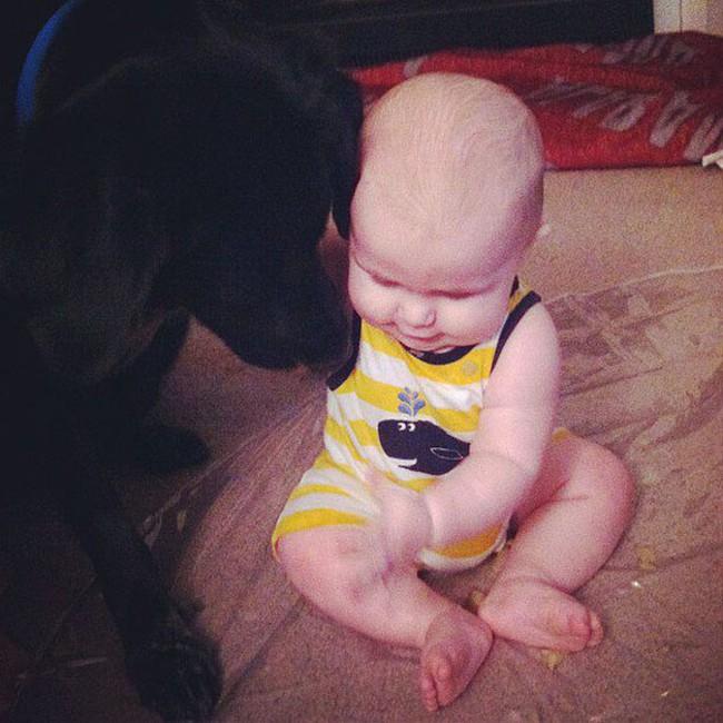 Chó cưng hành xử kỳ lạ mỗi khi ở bên cạnh con trai 7 tháng tuổi, bố mẹ lắp camera liền báo cảnh sát bắt giữ bảo mẫu - Ảnh 3.