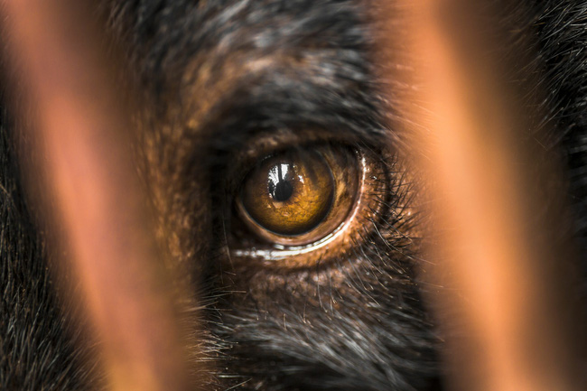 """Những màn tra tấn tàn ác từ ngành công nghiệp nuôi gấu lấy mật và sự thật """"lạnh người"""" khiến con người có thể phải trả giá đắt - Ảnh 8."""