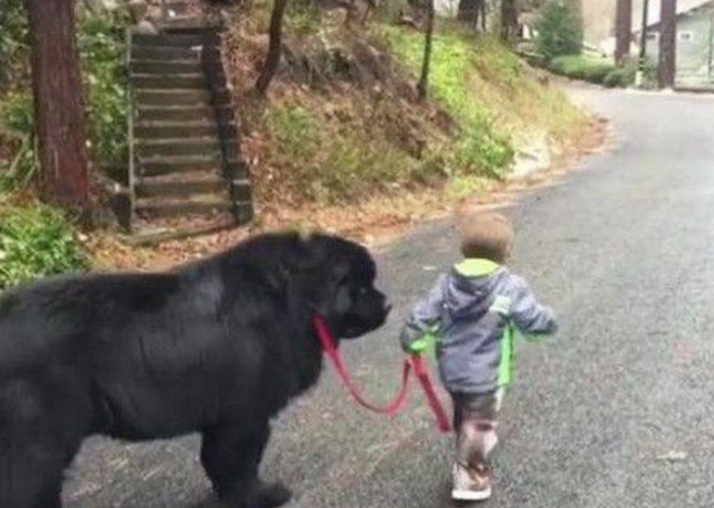 """Giận mẹ, cậu bé mẫu giáo lén rủ """"anh trai"""" bỏ nhà ra đi, ai thấy cũng cười ngất: """"Không biết ông anh lắm lông nuôi em kiểu gì?"""" - Ảnh 3."""