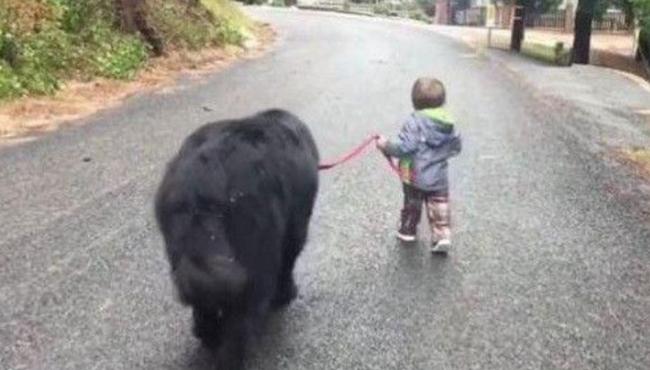 """Giận mẹ, cậu bé mẫu giáo lén rủ """"anh trai"""" bỏ nhà ra đi, ai thấy cũng cười ngất: """"Không biết ông anh lắm lông nuôi em kiểu gì?"""" - Ảnh 2."""
