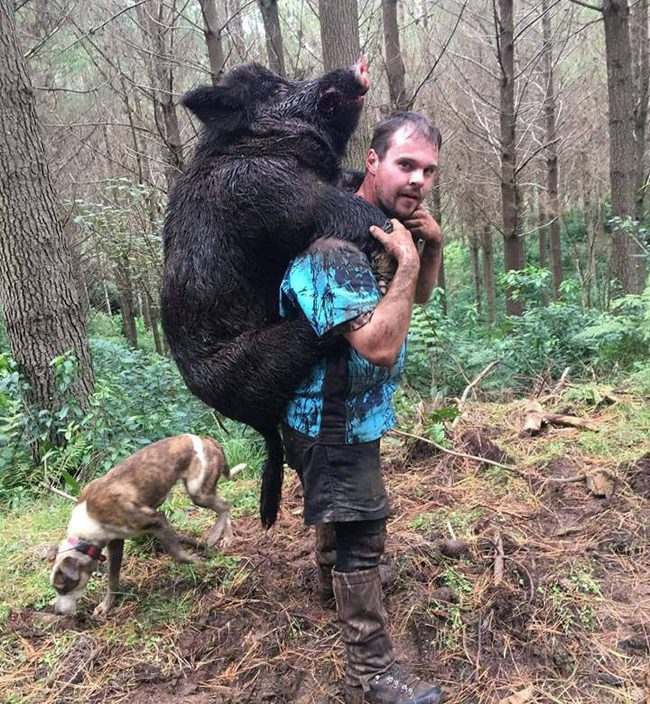 8 lý do khẳng định lợn là loài vật siêu hay tuyệt vời chứ nào có bẩn thỉu dốt nát - Ảnh 1.