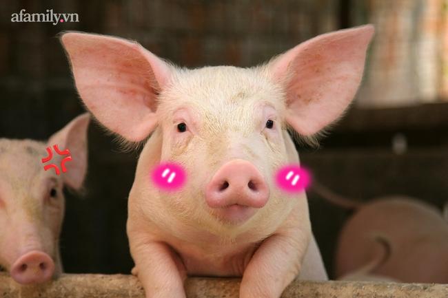 8 lý do khẳng định lợn là loài vật siêu hay tuyệt vời chứ nào có bẩn thỉu dốt nát - Ảnh 3.