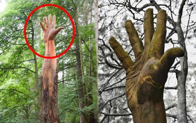Giữa rừng cây xanh bỗng trồi lên một bài tay khổng lồ gân guốc gây kinh hãi nhưng sự thật lại khiến mọi người phải trầm trồ - Ảnh 4.