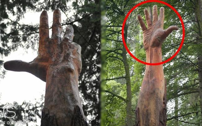 Giữa rừng cây xanh bỗng trồi lên một bài tay khổng lồ gân guốc gây kinh hãi nhưng sự thật lại khiến mọi người phải trầm trồ - Ảnh 5.