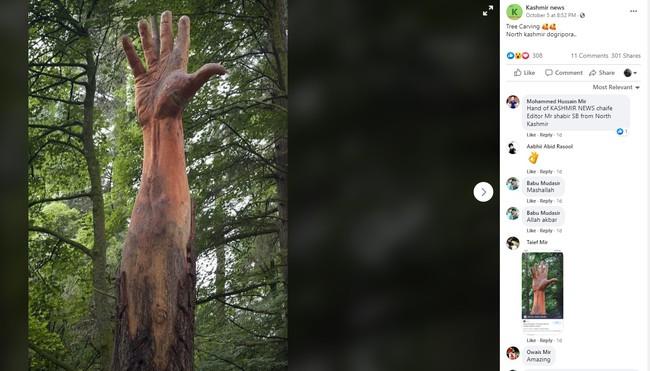 Giữa rừng cây xanh bỗng trồi lên một bài tay khổng lồ gân guốc gây kinh hãi nhưng sự thật lại khiến mọi người phải trầm trồ - Ảnh 1.