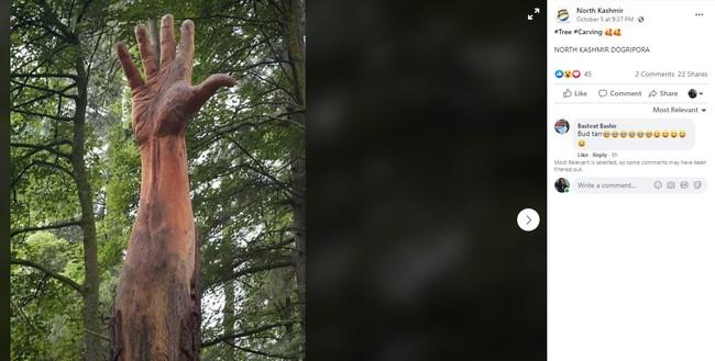 Giữa rừng cây xanh bỗng trồi lên một bài tay khổng lồ gân guốc gây kinh hãi nhưng sự thật lại khiến mọi người phải trầm trồ - Ảnh 2.