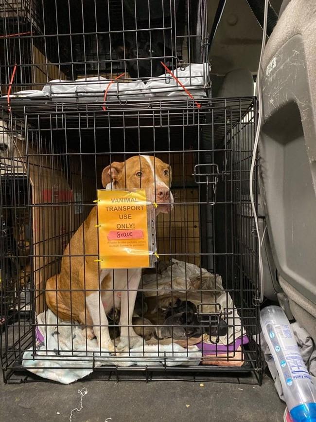 Chở 3 cô chó trên xe khởi hành chuyến hành trình dài, người phụ nữ đến nơi liền phát hiện ghế sau có đến tận... 17 con chó - Ảnh 4.