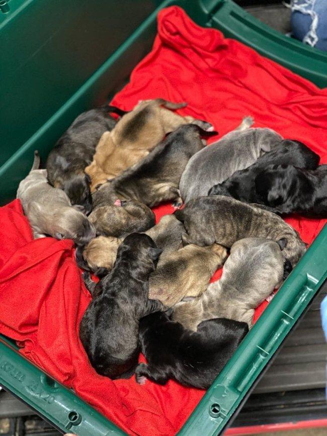 Chở 3 cô chó trên xe khởi hành chuyến hành trình dài, người phụ nữ đến nơi liền phát hiện ghế sau có đến tận... 17 con chó - Ảnh 2.