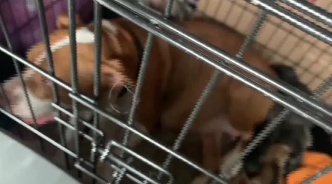 Chở 3 cô chó trên xe khởi hành chuyến hành trình dài, người phụ nữ đến nơi liền phát hiện ghế sau có đến tận... 17 con chó - Ảnh 1.
