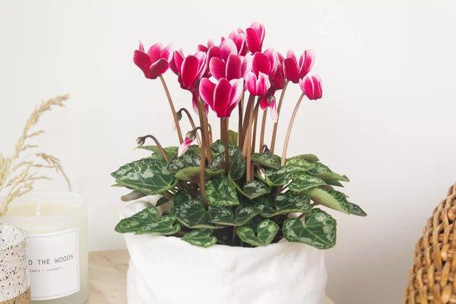 10 mẹo phong thủy đơn giản giúp ngôi nhà của bạn luôn tràn ngập mùi thơm tự nhiên tuyệt vời - ảnh 7.