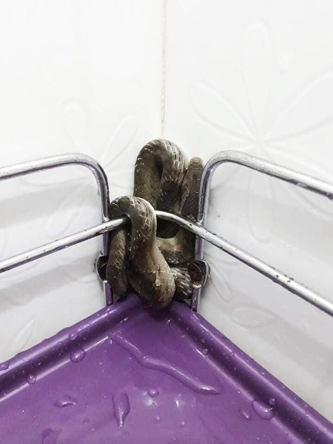 """Mò tìm khăn tắm giữa trời lạnh tê tái, cô gái """"điếng"""" người khi túm phải con rắn to đùng trong góc WC - Ảnh 2."""