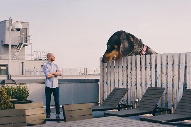 Bức ảnh chú chó khổng lồ to như con bò xuất hiện trên phố khiến dân mạng choáng váng, xem đến bức ảnh cuối lại càng ngỡ ngàng hơn nữa - Ảnh 1.