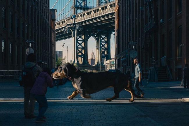 Bức ảnh chú chó khổng lồ to như con bò xuất hiện trên phố khiến dân mạng choáng váng, xem đến bức ảnh cuối lại càng ngỡ ngàng hơn nữa - Ảnh 5.