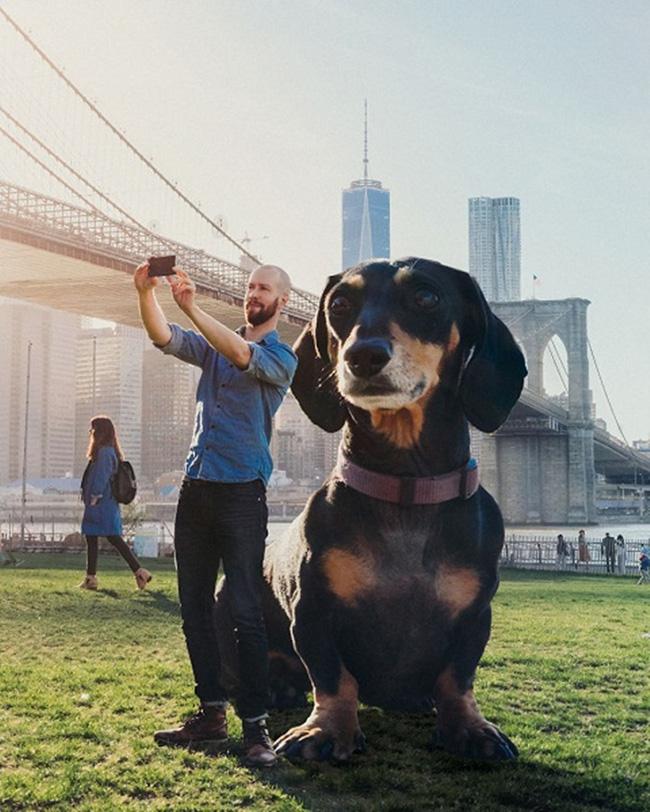 Bức ảnh chú chó khổng lồ to như con bò xuất hiện trên phố khiến dân mạng choáng váng, xem đến bức ảnh cuối lại càng ngỡ ngàng hơn nữa - Ảnh 6.