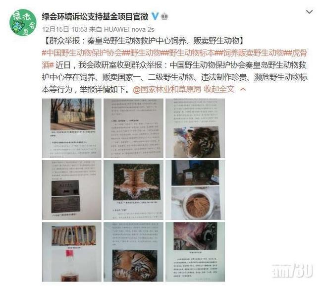 Núp bóng bảo trợ để kinh doanh động vật quý hiếm, một trung tâm ở Trung Quốc bán lông hổ giá... 2,5 tỷ đồng - Ảnh 1.