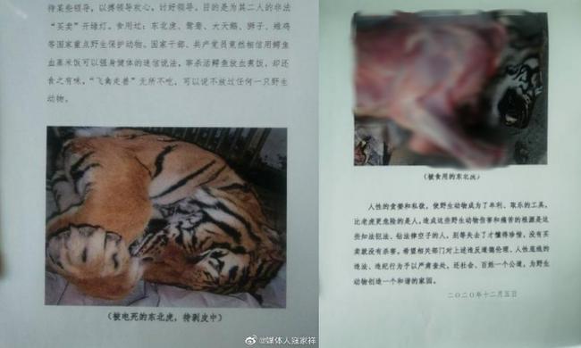 Núp bóng bảo trợ để kinh doanh động vật quý hiếm, một trung tâm ở Trung Quốc bán lông hổ giá... 2,5 tỷ đồng - Ảnh 3.