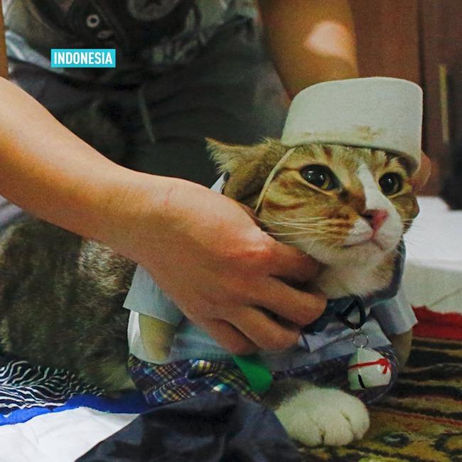 Thầy giáo bỏ nghề mở tiệm may quần áo mèo, ngày ế ẩm nhất vẫn thu tiền triệu - Ảnh 2.