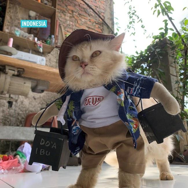 Thầy giáo bỏ nghề mở tiệm may quần áo mèo, ngày ế ẩm nhất vẫn thu tiền triệu - Ảnh 3.
