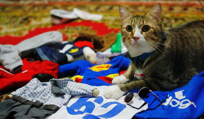 Thầy giáo bỏ nghề mở tiệm may quần áo mèo, ngày ế ẩm nhất vẫn thu tiền triệu - Ảnh 5.
