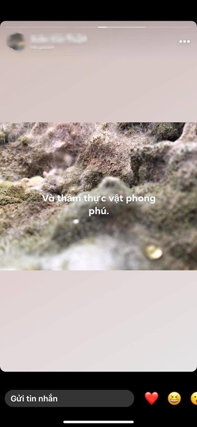 """Bức ảnh thoạt nhìn tưởng thảm thực vật trong hang Sơn Đoòng, nào ngờ sự thật khiến hội chị em giật mình """"phải chạy đi kiếm nồi cơm của nhà mình"""" - Ảnh 2."""