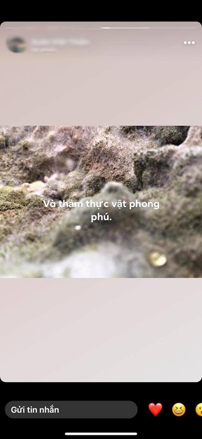 """Bức ảnh thoạt nhìn tưởng thảm thực vật trong hang Sơn Đoòng, nào ngờ sự thật khiến hội chị em giật mình """"phải chạy đi kiếm nồi cơm của nhà mình"""" - Ảnh 3."""