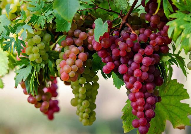"""8 loại trái cây nhiều người ưa thích, nếu ăn vào buổi tối sẽ trở thành """"độc dược"""" - Ảnh 3."""