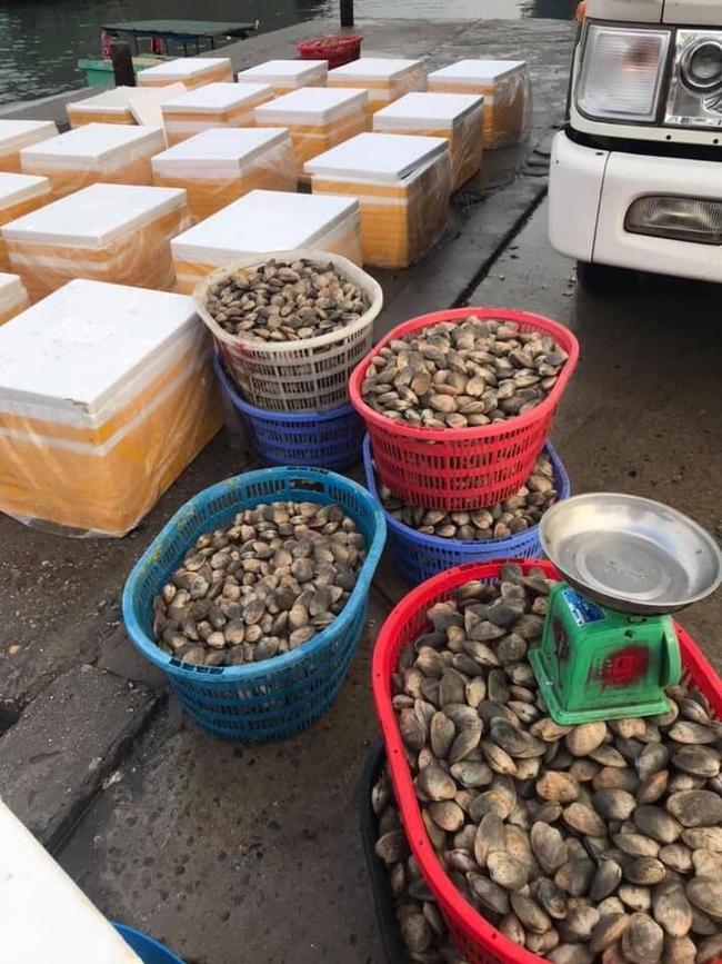 Thực hư ngao hai cùi Vân Đồn đang được bán giá rẻ giật mình, chỉ 65 ngàn đồng/kg rao khắp chợ mạng - Ảnh 5.